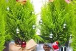 Mách bạn cách làm cây thông xinh lung linh đón Giáng sinh ý nghĩa và an lành-11