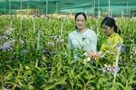 Thôn nữ xinh như hotgirl trồng phong lan 200.000 chậu với 100 loài hoa, lời 2 tỷ/năm