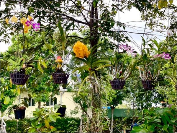 NSƯT Trịnh Kim Chi phụ chồng đại gia làm vườn, hé lộ vườn lan đắt giá trong biệt thự rộng 200m2-7