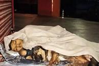 Bức ảnh cậu bé nằm co ro ngoài đường cùng con chó trong chiếc chăn mỏng manh lấy nước mắt cộng đồng mạng và cái kết đầy bất ngờ