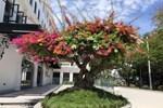 Cây nhài cổ thụ hoa biến đổi màu, đại gia xếp hàng rước về chơi Tết-8