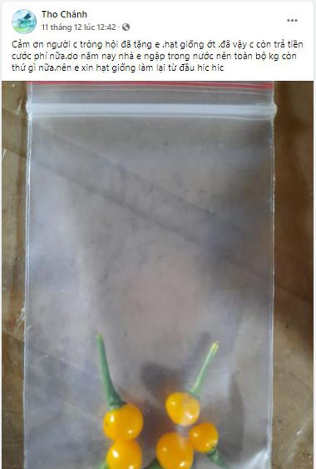Bất ngờ loại ớt đắt nhất thế giới giá nửa tỷ một kg được người Việt đem tặng miễn phí-6