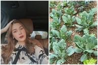 Bà bầu Quế Vân khoe vườn rau sạch nhà trồng khiến dân tình nhìn là mê