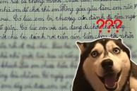 Bé tiểu học làm văn tả chó cưng, người lớn đọc xong cười muốn nín thở: Chết thật! Chó này thành tinh, thông minh hơn cả người