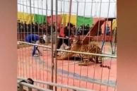 Hổ tấn công huấn luyện viên trong rạp xiếc