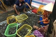 Phát hiện cơ sở bơm tạp chất vào tôm nguyên liệu tại Kiên Giang