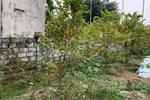 """Công chứng mỗi ngày 20 lô đất, Đà Nẵng khuyến cáo tình trạng sốt đất"""" ảo-3"""