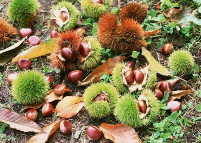 Thứ mọc hoang đến mùa rụng đầy gốc, dân nhặt về bán đắt hàng như tôm tươi-2