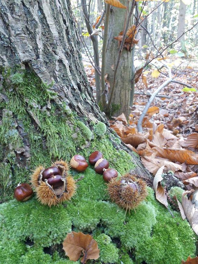 Thứ mọc hoang đến mùa rụng đầy gốc, dân nhặt về bán đắt hàng như tôm tươi-4