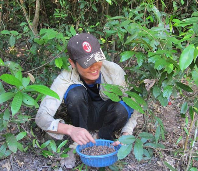 Thứ mọc hoang đến mùa rụng đầy gốc, dân nhặt về bán đắt hàng như tôm tươi-6