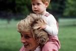 Thông tin làm rung chuyển nhà Meghan đầu năm mới: Nữ hoàng Anh chỉ mất 2 giây để từ chối vợ chồng cháu trai, William thất vọng với em ruột-4