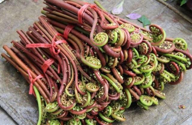 Đây là loại rau chứa chất gây ung thư cực mạnh mà WHO cảnh báo, người Việt nên cẩn trọng kẻo ăn nhầm-2