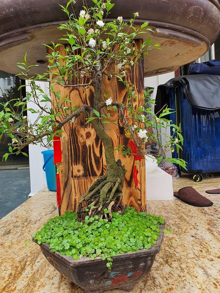 Khám phá bên trong biệt thự cao cấp có nhiều cây cảnh quý của Tuấn Hưng-10
