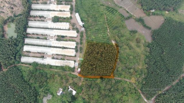 Đại gia chơi lớn, bỏ 30 tỷ đồng mua đất sân bay Long Thành làm nhà vườn-4
