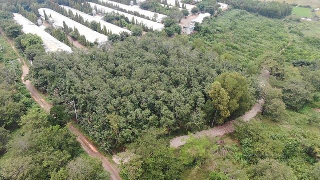 Đại gia chơi lớn, bỏ 30 tỷ đồng mua đất sân bay Long Thành làm nhà vườn-5