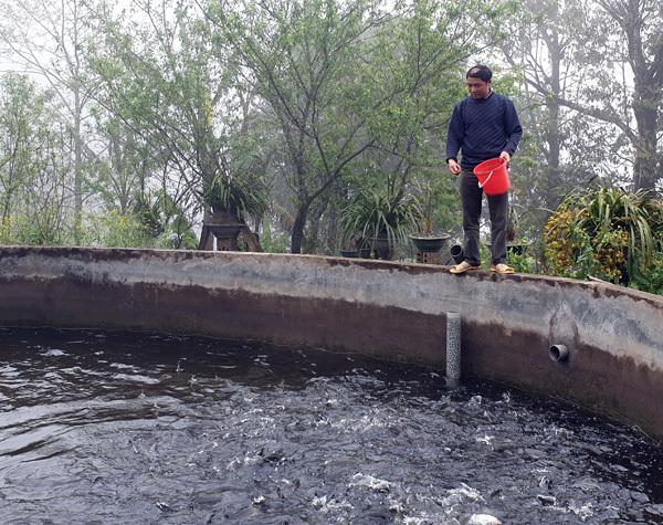 Cá hồi Sa Pa lại siêu rẻ, 1 năm 2 đợt giảm sốc, dân nuôi lỗ nặng-2