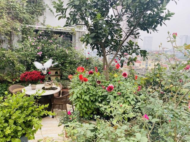 Vườn hoa 200m2 trên sân thượng, đẹp như tiên cảnh của mẹ đảm Hà thành-3