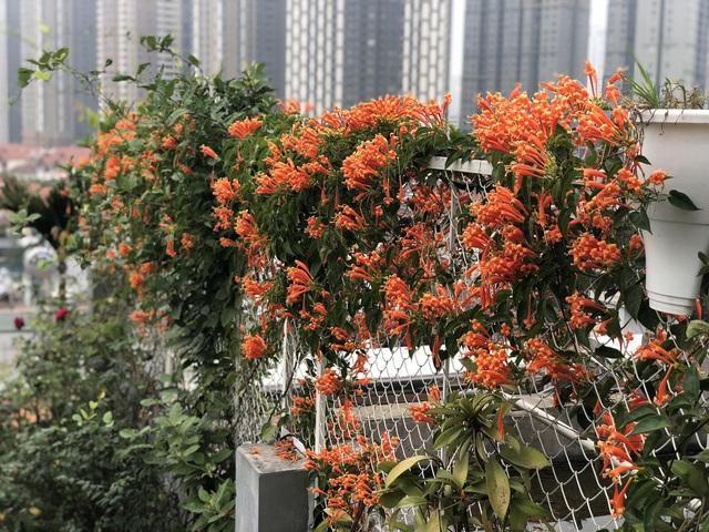 Vườn hoa 200m2 trên sân thượng, đẹp như tiên cảnh của mẹ đảm Hà thành-4
