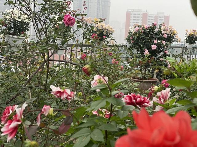 Vườn hoa 200m2 trên sân thượng, đẹp như tiên cảnh của mẹ đảm Hà thành-5