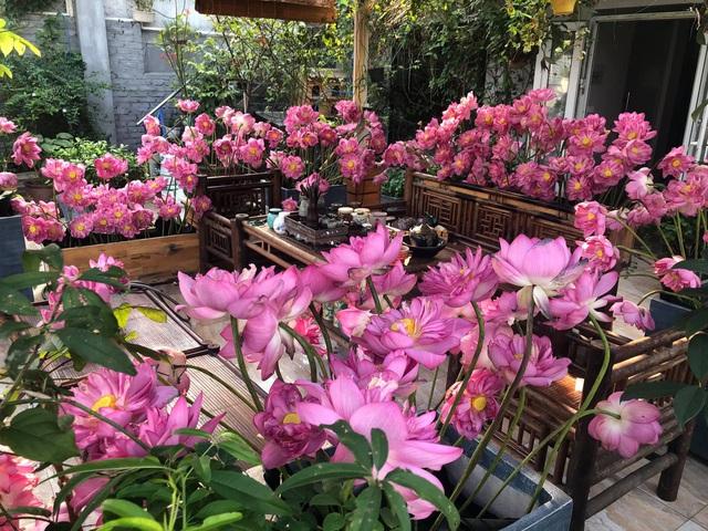 Vườn hoa 200m2 trên sân thượng, đẹp như tiên cảnh của mẹ đảm Hà thành-7