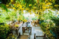 Vườn hoa 200m2 trên sân thượng, đẹp như 'tiên cảnh' của mẹ đảm Hà thành