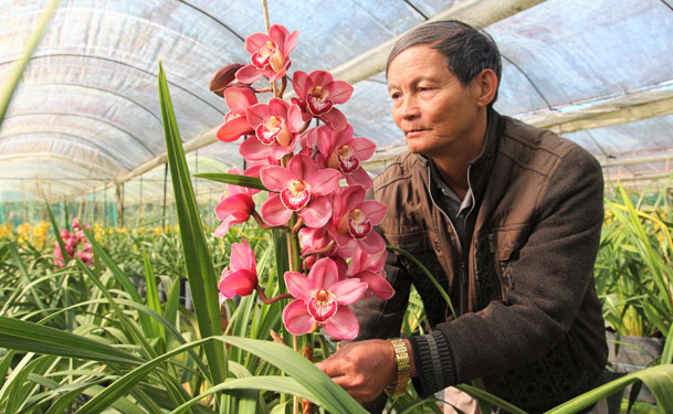 Hoa Trung Quốc gắn mác hoa Tết Đà Lạt-1
