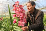 Suốt cả thế kỷ chỉ trồng một loại hoa, cả làng đều đặn thu tiền tỷ-6