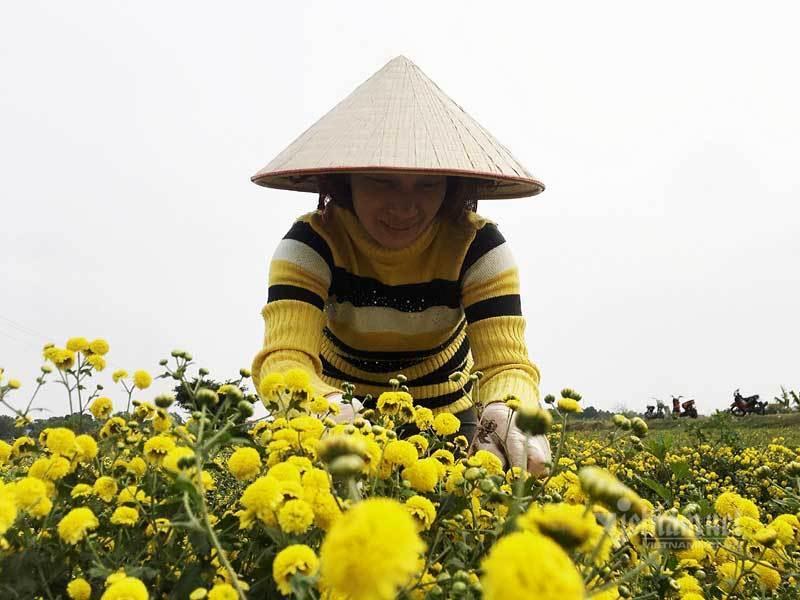 Suốt cả thế kỷ chỉ trồng một loại hoa, cả làng đều đặn thu tiền tỷ-4