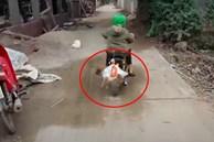 Treo chú chó nhỏ lủng lẳng trên thanh tre rồi lái xe kéo đi trên đường, anh em Tam Mao bị chỉ trích vì 'ngược đãi động vật'