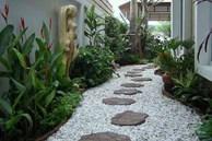 Lựa chọn cây phong thủy bài trí trong nhà, xua tà khí, mang lại may mắn cho gia chủ