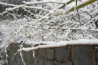 Nhiệt độ Sa Pa xuống dưới 0 độ C, có mưa và tất cả đều đang trông chờ tuyết rơi như 7 năm trước
