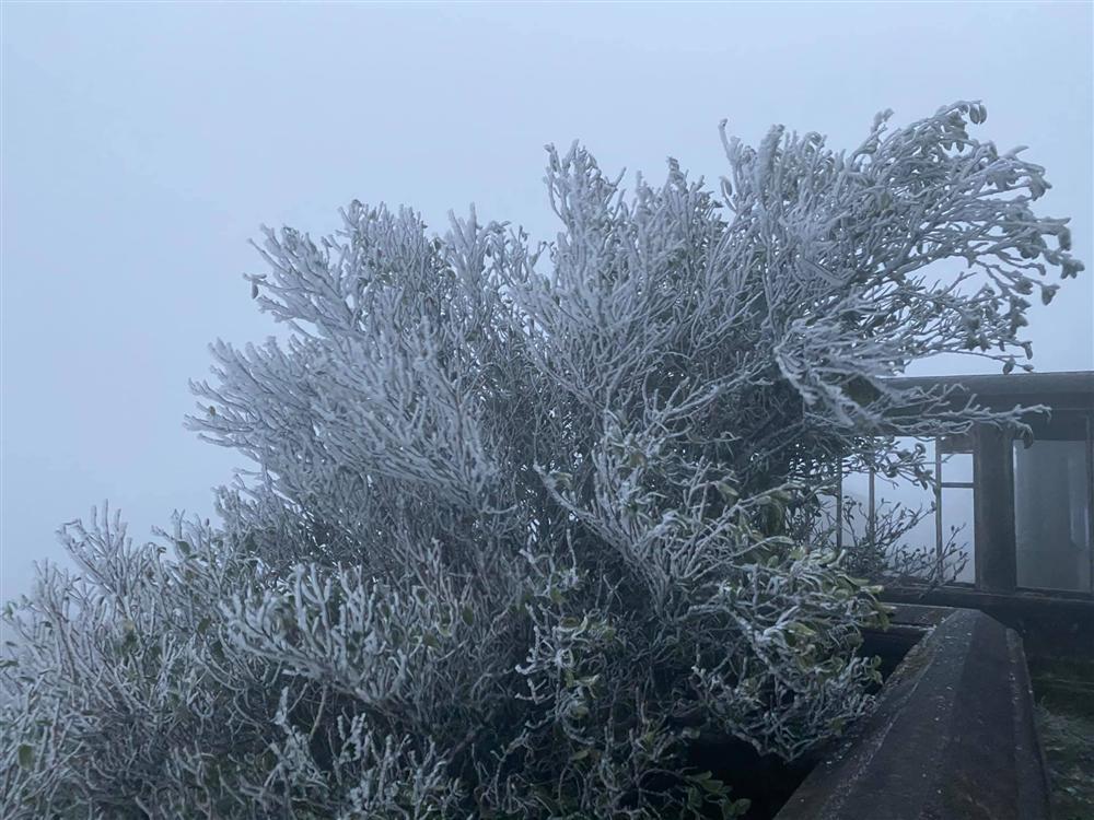 Clip: Rạng sáng nay (11/1), hội mê phượt xôn xao tuyết đã rơi tại Sapa-3