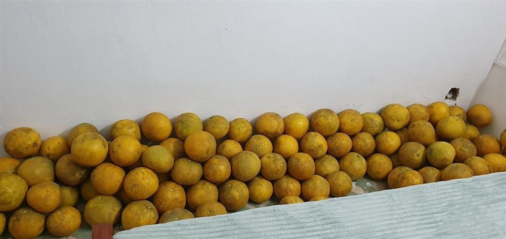 Bưởi Diễn rẻ chưa từng có giá chỉ 3.000 đồng/quả, tiểu thương ngày bán cả nghìn quả-6