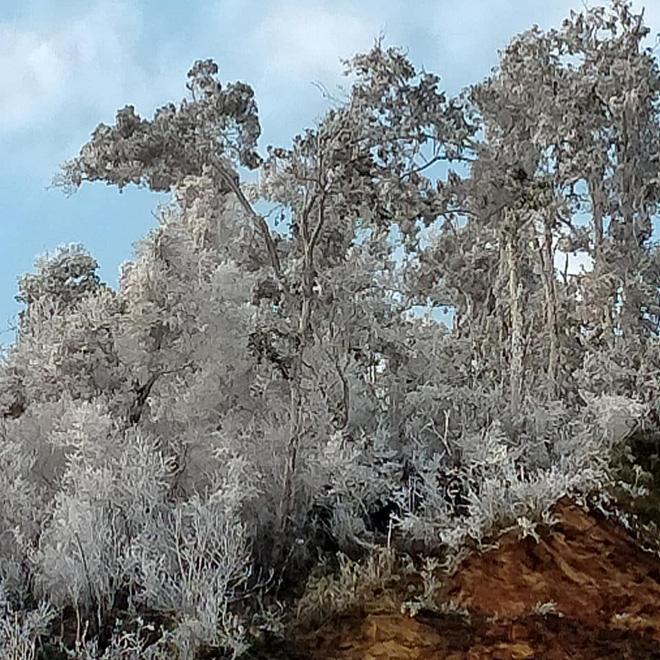 Nhiều nơi ở Nghệ An xuất hiện băng giá, cây cối, vật dụng đều bị đóng băng-1