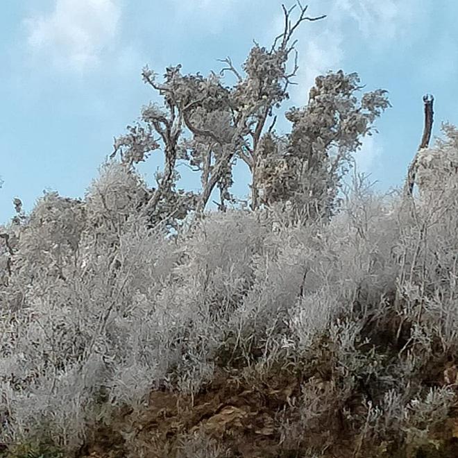 Nhiều nơi ở Nghệ An xuất hiện băng giá, cây cối, vật dụng đều bị đóng băng-2