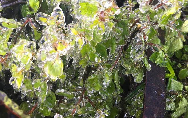Nhiều nơi ở Nghệ An xuất hiện băng giá, cây cối, vật dụng đều bị đóng băng-8