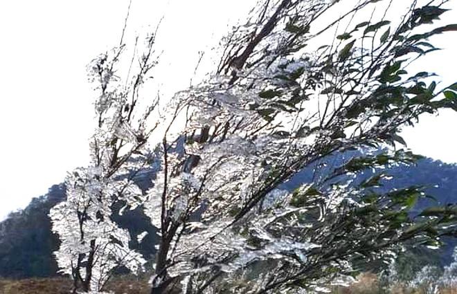 Nhiều nơi ở Nghệ An xuất hiện băng giá, cây cối, vật dụng đều bị đóng băng-9