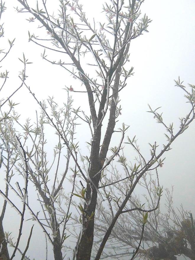 Nhiều nơi ở Nghệ An xuất hiện băng giá, cây cối, vật dụng đều bị đóng băng-12