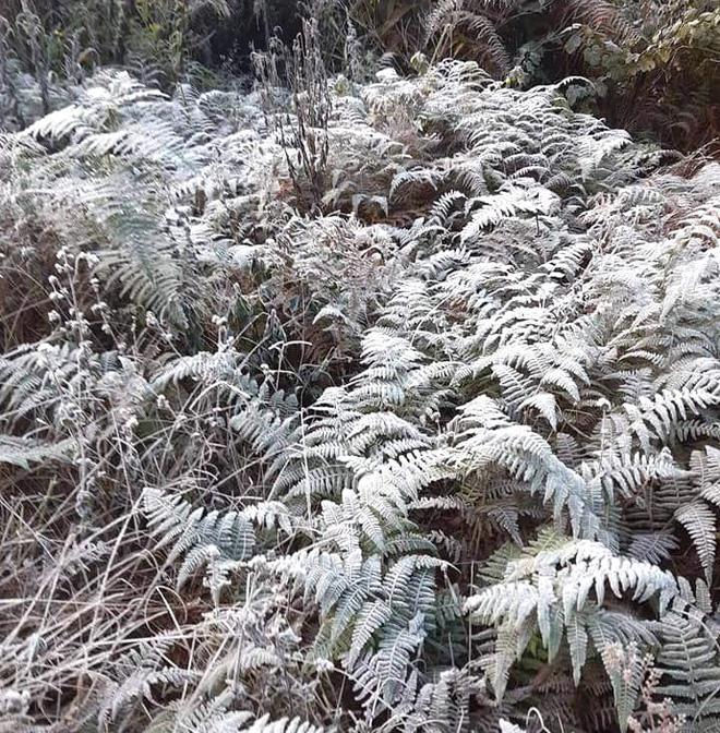 Nhiều nơi ở Nghệ An xuất hiện băng giá, cây cối, vật dụng đều bị đóng băng-14