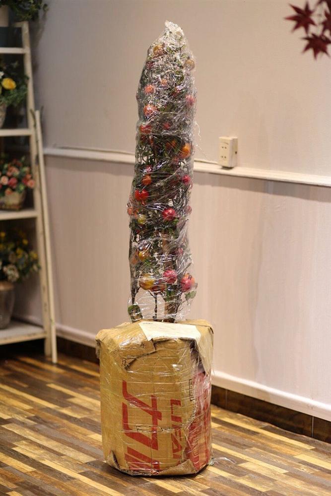 Chậu cây lựu giả mang ý nghĩa phong thủy dù giá 1-4 triệu/cây vẫn hút bà nội trợ-6