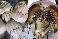 Bọ biển 'khổng lồ' 1 triệu đồng/ đôi, đặc sản lạ hút khách sành ăn