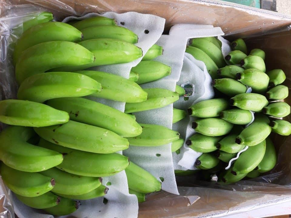Bỏ 25 triệu đồng mua cả vườn chuối, tiểu thương thắng đậm gấp đôi khi bán 10 ngày Tết-4