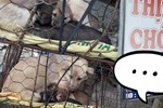 Hình ảnh khiến MXH Việt 'dậy sóng': Chó mẹ cho đàn con bú trước khi bị đưa vào lò mổ