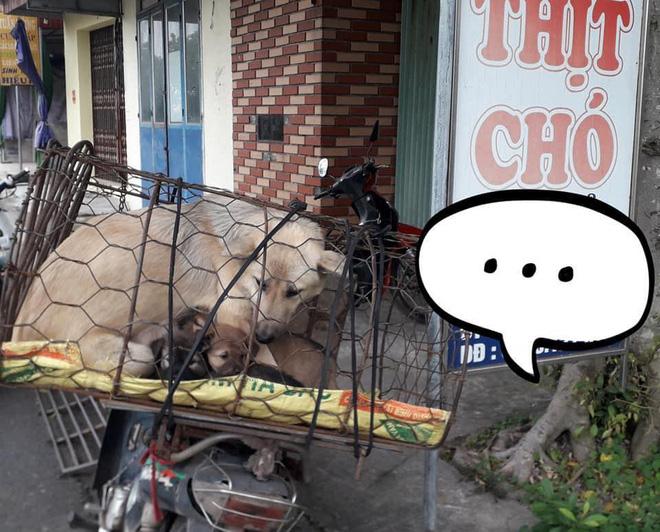 Hình ảnh khiến MXH Việt dậy sóng: Chó mẹ cho đàn con bú trước khi bị đưa vào lò mổ-1