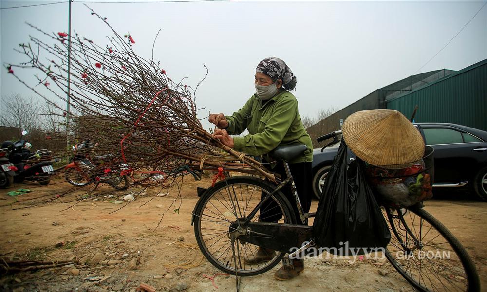 Đào được mùa cắt tới đâu bán hết tới đó, người dân Nhật Tân phấn khởi vì Tết năm nay bánh chưng có thịt!-3