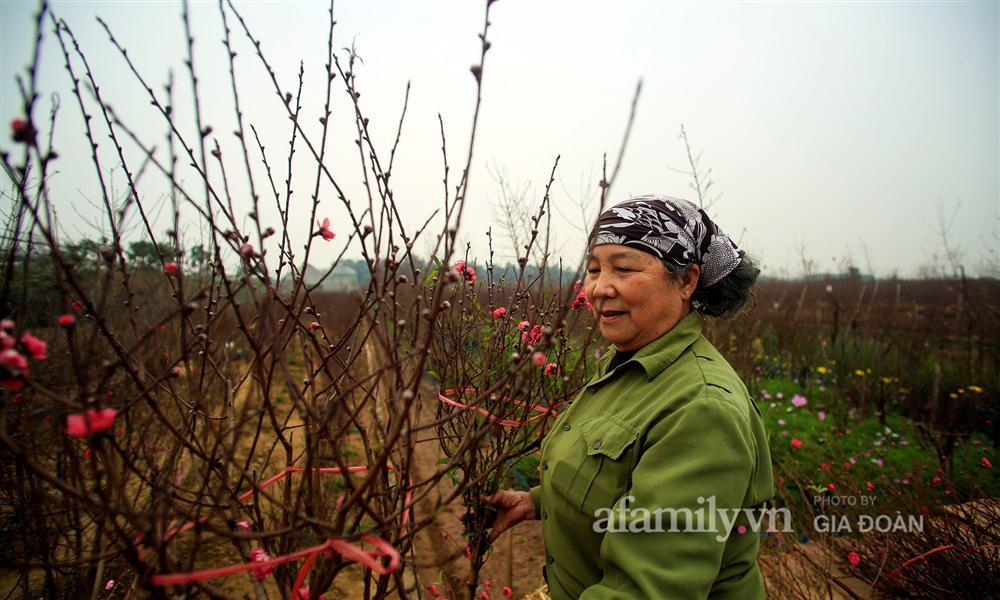 Đào được mùa cắt tới đâu bán hết tới đó, người dân Nhật Tân phấn khởi vì Tết năm nay bánh chưng có thịt!-4