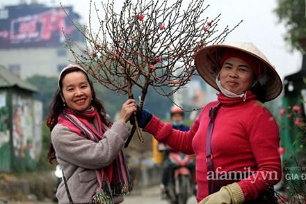 Đào được mùa cắt tới đâu bán hết tới đó, người dân Nhật Tân phấn khởi vì Tết năm nay