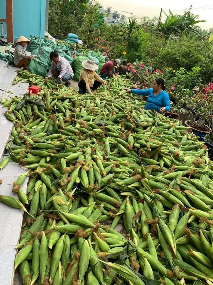 Vợ chồng trẻ Hà Nội vào Sài Gòn mở vựa buôn ngô, thu 30 triệu/tháng-1