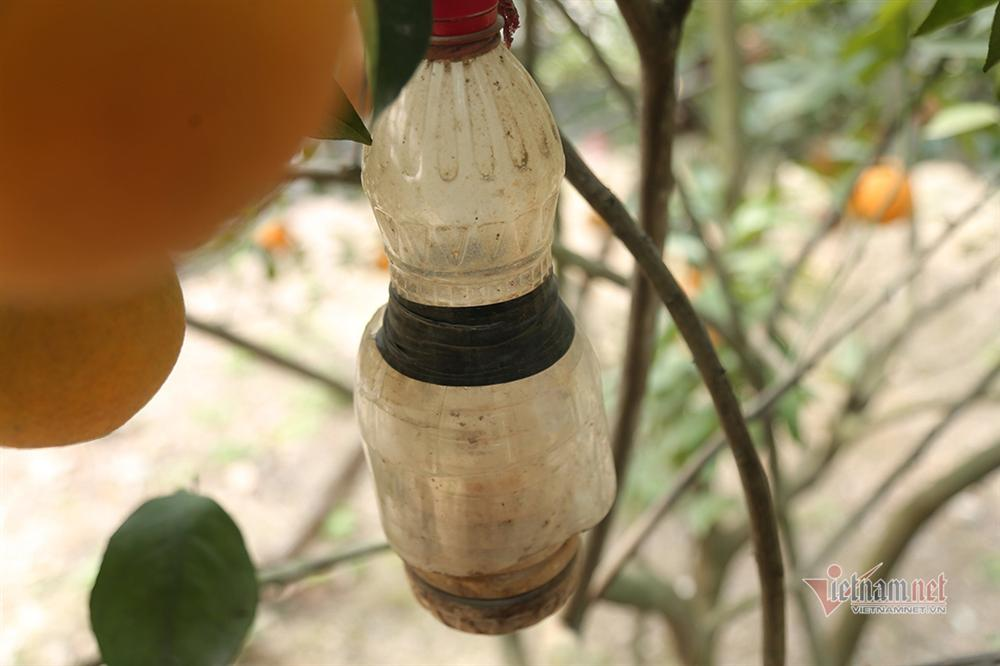 Hàng độc thưởng Tết của xứ Nghệ, rượu quê ngâm cam tiến vua-12