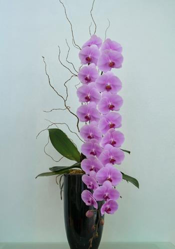 3 loại hoa lan đắt xắt ra miếng những nhà có tiền hay chọn mua dịp Tết-6